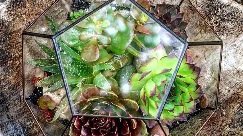 Частица тепла лета в ленту...Флорариум с цвето...